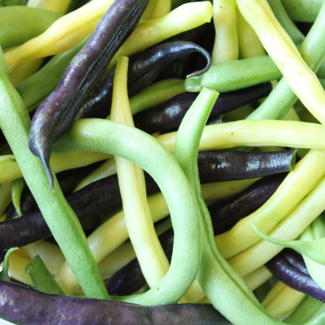 Multicolored String Beans