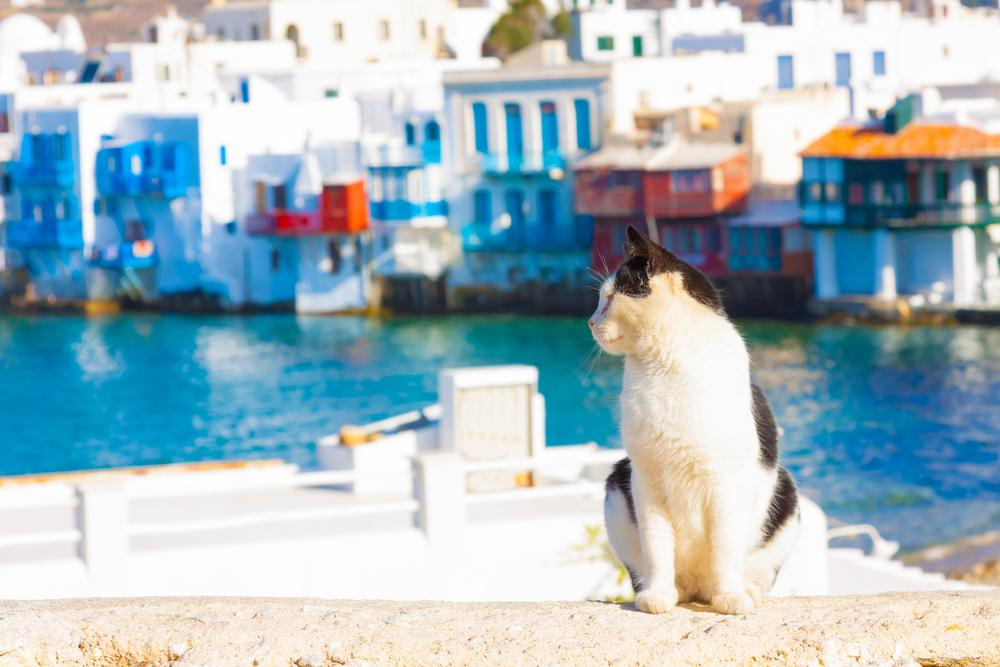 Where To Leave a Cat During Vacation?