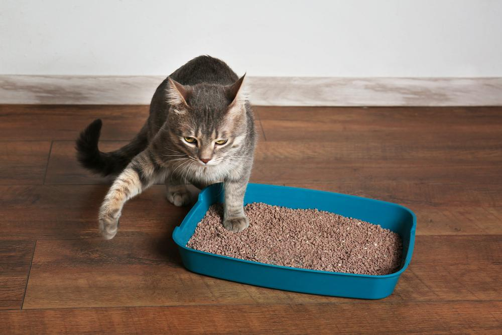 Why The Cat No Longer Goes To Its Litter Box And What Can Be Done About It?