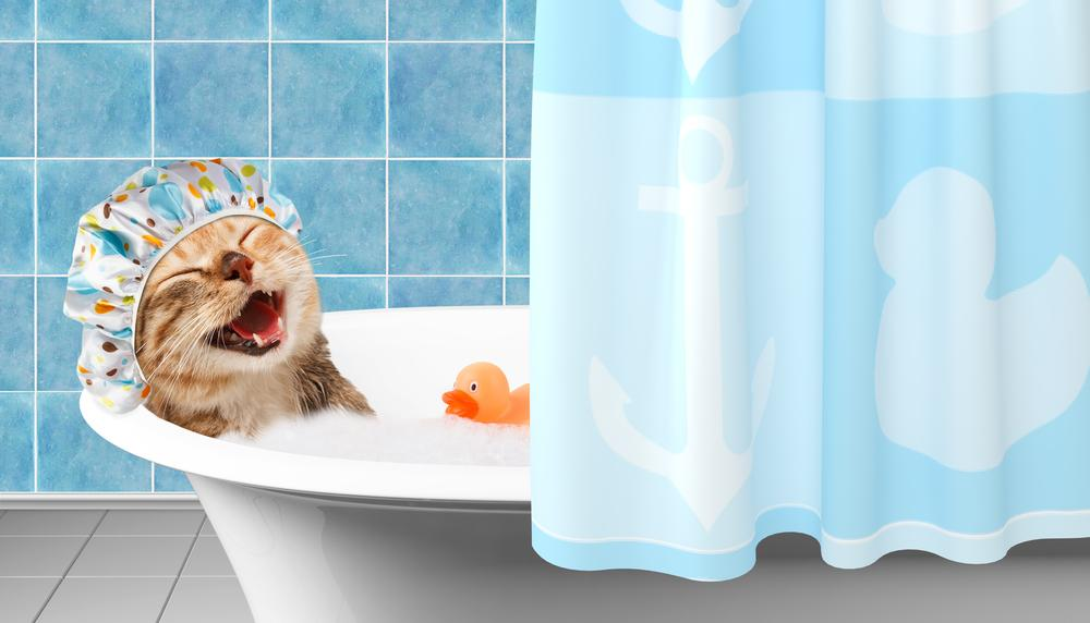 How To Bathe a Cat?
