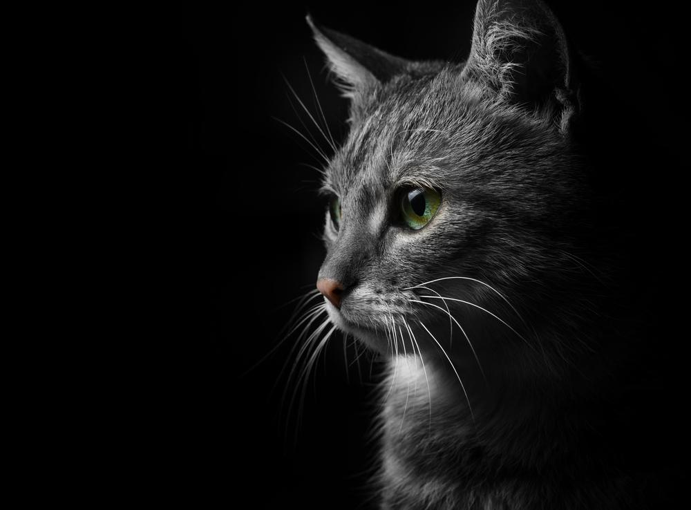 Why Do Cats See in the Dark?