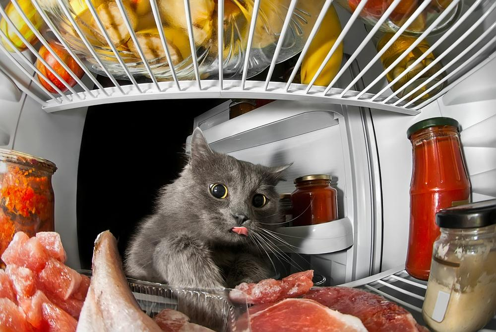 Should I Feed My Cat Meat?