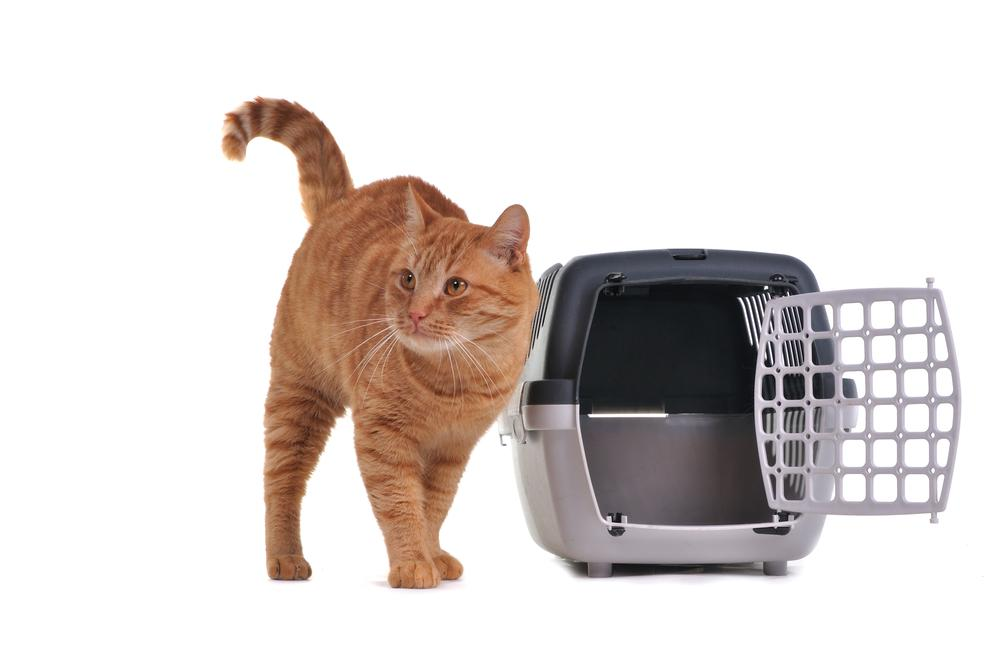 Choosing a Cat Carrier for a Flight