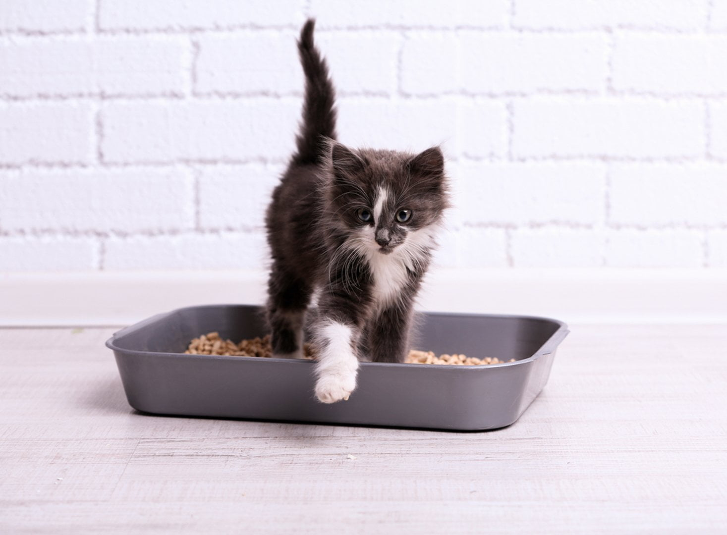 Why Does the Cat Refuse to Pee in a Litter Box?