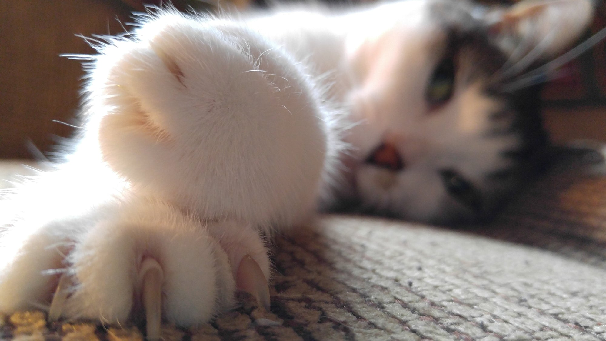 Cat Declawing: Pros and Cons