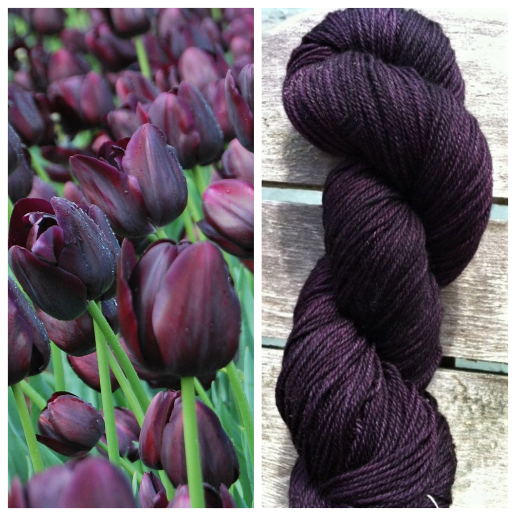Delightful DK 75/25 Queen of the Night Tulip
