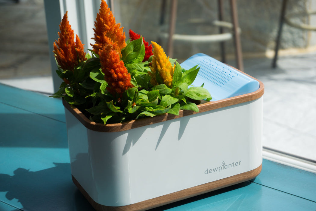 Dewplanter - The Water Generating Planter - Innovatefy