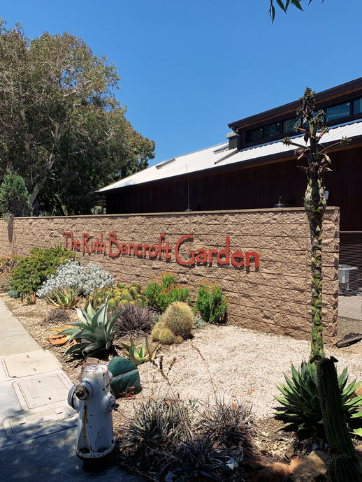 The Ruth Bancroft Garden & Nursery
