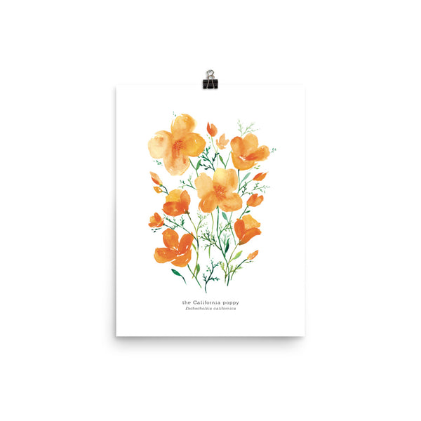 California Poppies Watercolor | Art Print