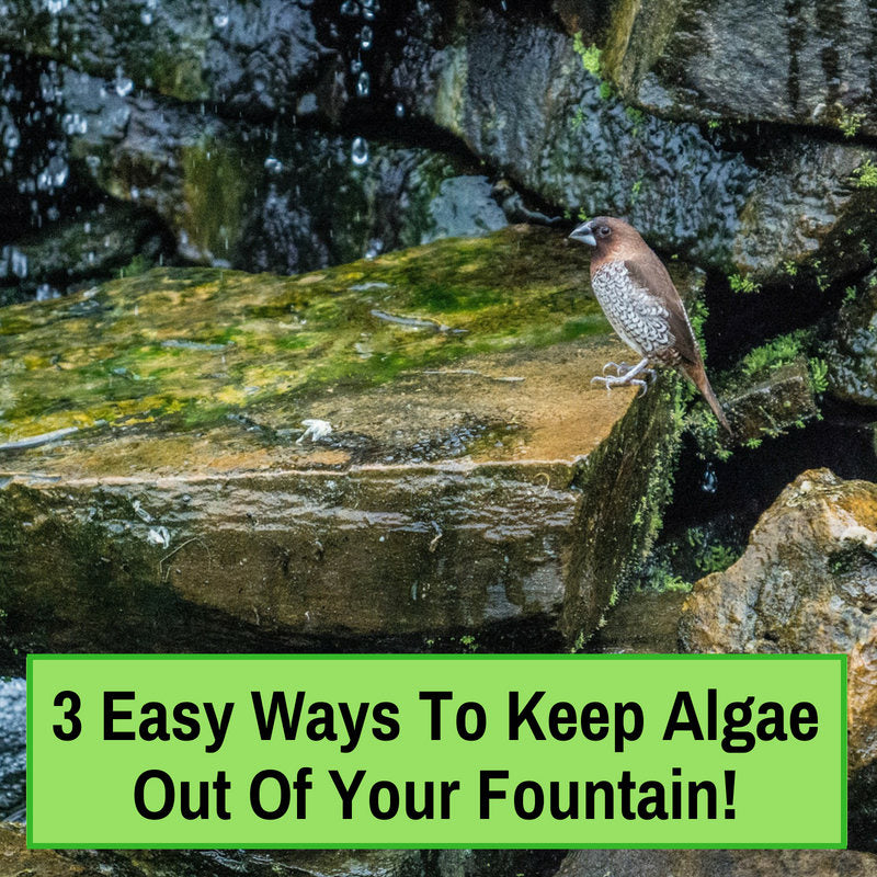 Easy Ways To Keep Algae Out Of Your Fountain