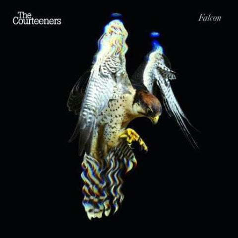 Courteeners Falcon Sister Ray