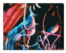 "Load image into Gallery viewer, ""Walt Disney's Enchanted Tiki Room Birds"" from Disney Photo Archives"