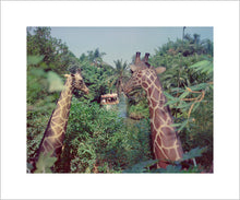 "Load image into Gallery viewer, ""Giraffes in the Jungle Cruise"" from Disney Photo Archives"
