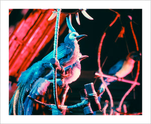 """Walt Disney's Enchanted Tiki Room Birds"" from Disney Photo Archives"
