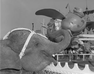 An elephant poses alongside the Dumbo the Flying Elephant attraction at Disneyland Park , circa 1955