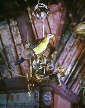 Load image into Gallery viewer, Close up of José, Master of Ceremonies of Walt Disney's Enchanted Tiki Room at Disneyland Park. This lively macaw is voiced by Disney Legend Wally Boag