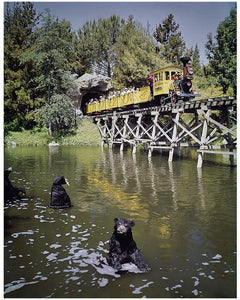 """Mine Train Through Nature's Wonderland Bears"" from Disney Photo Archives"
