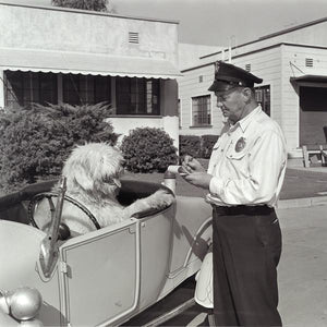 """The Shaggy Dog Speeding Ticket"" from Disney Photo Archives"