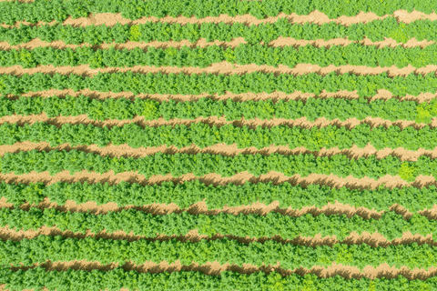 Aerial view of HempLand USA hemp farm