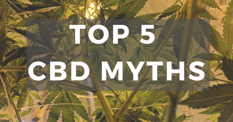 "text overlay reads ""Top 5 CBD Myths"" over image of cannabis leaves"