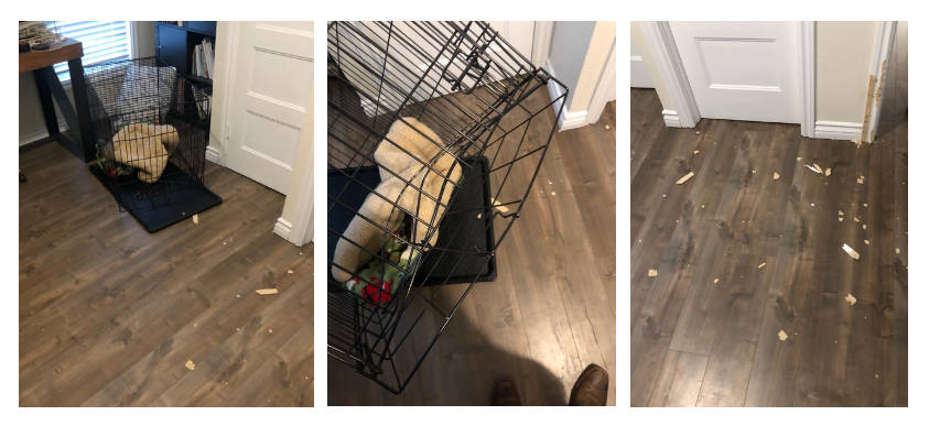 3 consecutive images of a chewed through dog crate and part of the wall of the doorframe chewed off with scraps on the floor