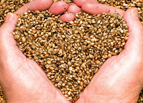 hands holding hemp seeds in the shape of a heart