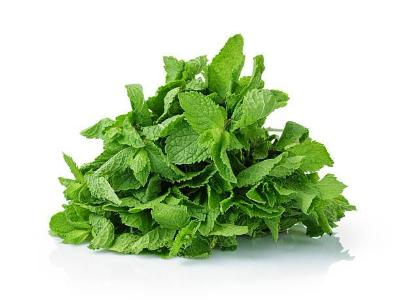 Fresh Herbs - Mint On Special!