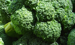 ZBroccoli 280 - 350 gm