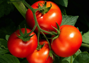 Tomatoes - Gourmet 500g