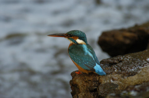 King Fisher 6 - markfowlerimages.com