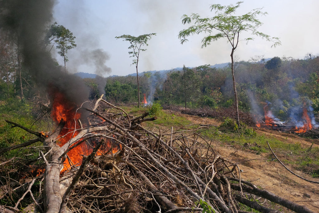 Image of deforestation, burning rainforest to make room for a palm oil plantation.