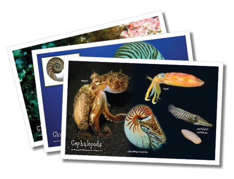 Shell Posters, set of 12