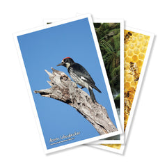 Nature Posters, set of 13