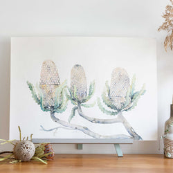 Native flowers Banksias original artwork by Stephanie Elizabeth Artwork
