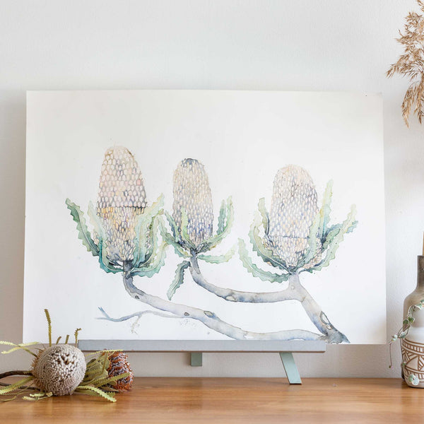 watercolour native flowers austrlaian banksias