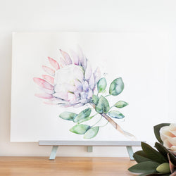 watercolour native flowers protea painting