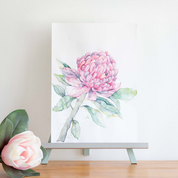 watercolour native flowers waratah painting