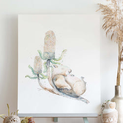 watercolour animals artwork sleeping wombat on banksia