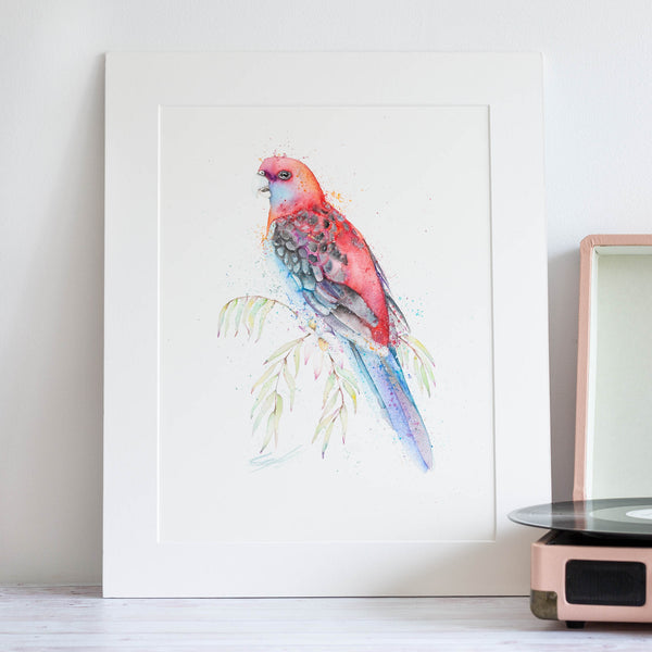 watercolour animals artwork red rosella