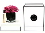 Herve Gambs - Fuschia Rose in Black Cube