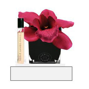 Herve Gambs - Fuschia Orchid in Black Cube
