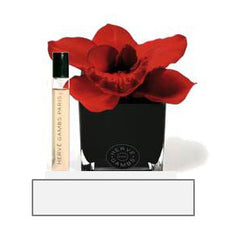 Herve Gambs - Red Orchid in Black Cube