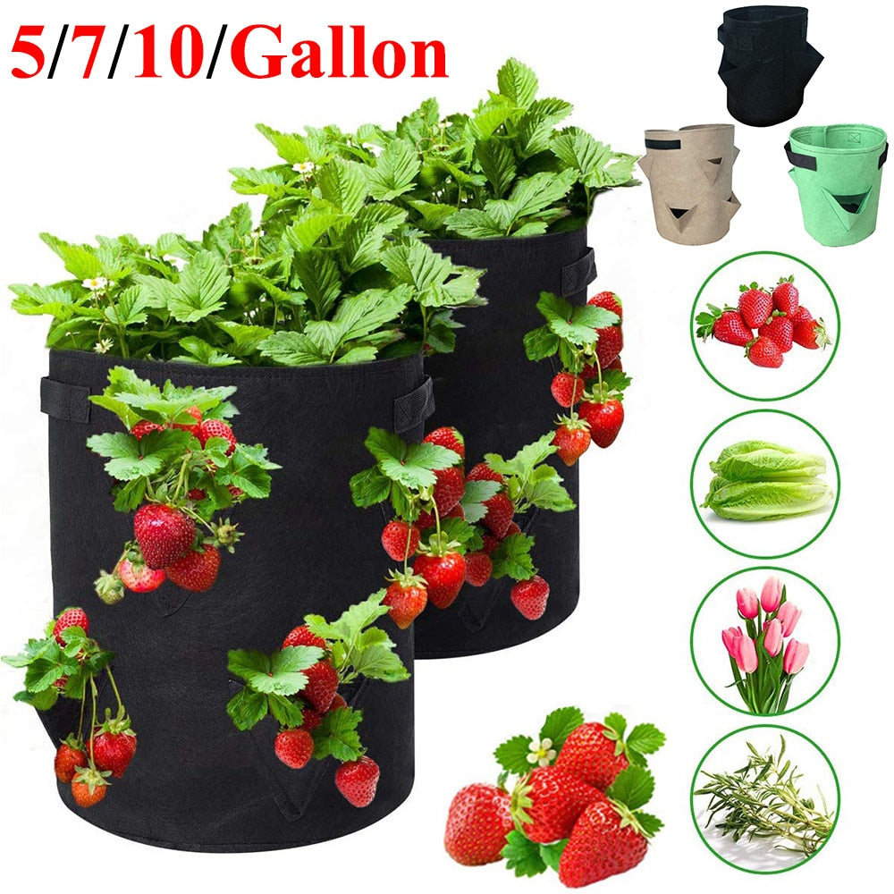 Strawberry Grow Bag