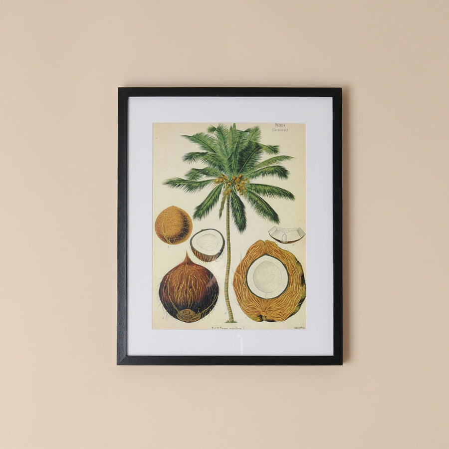 Framed Botanical Print Coconut