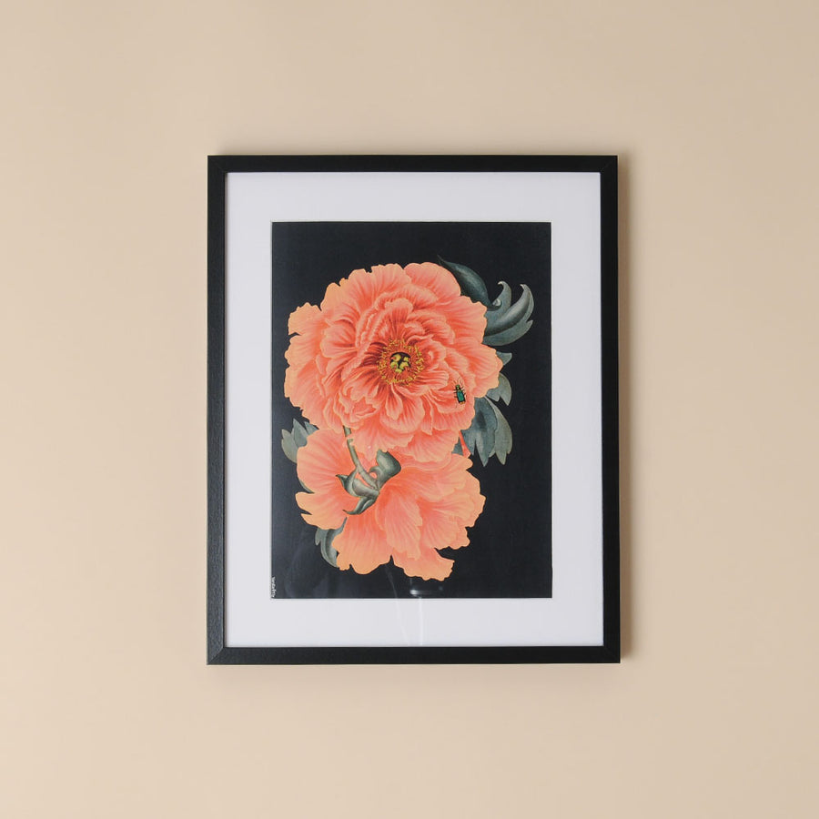 Framed Botanical Print Orange Peony