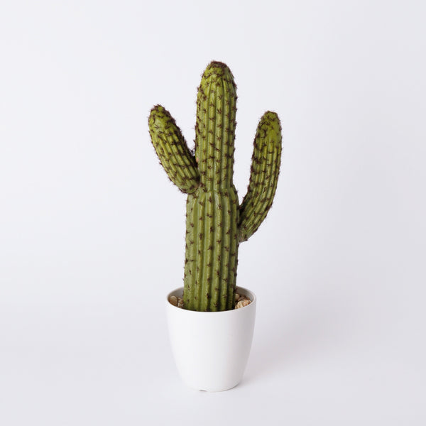 how to make a cactus plant