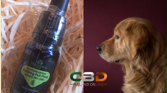 Using CBD Oil for Pet Health