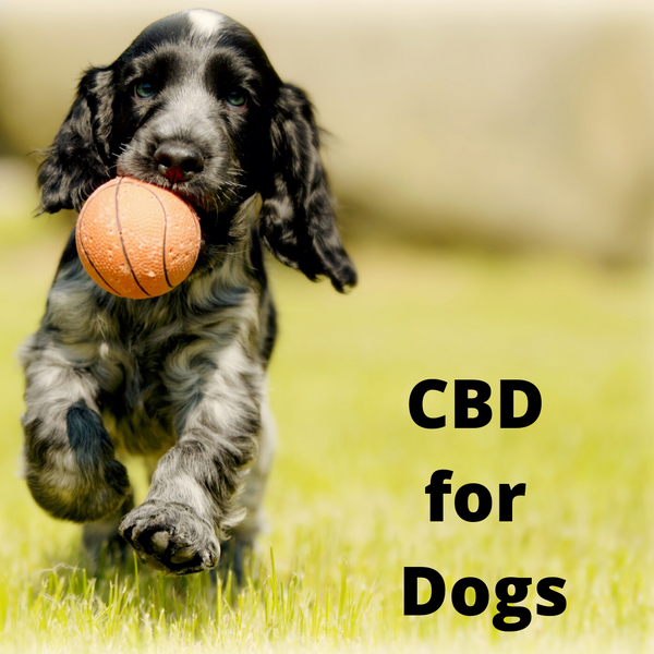 CBD and Dogs: 15 Ways It May Help Your Pet