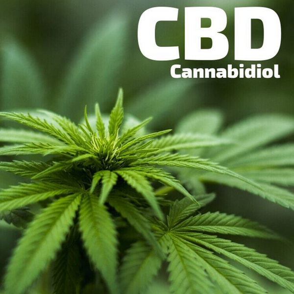 A Comprehensive Guide About CBD