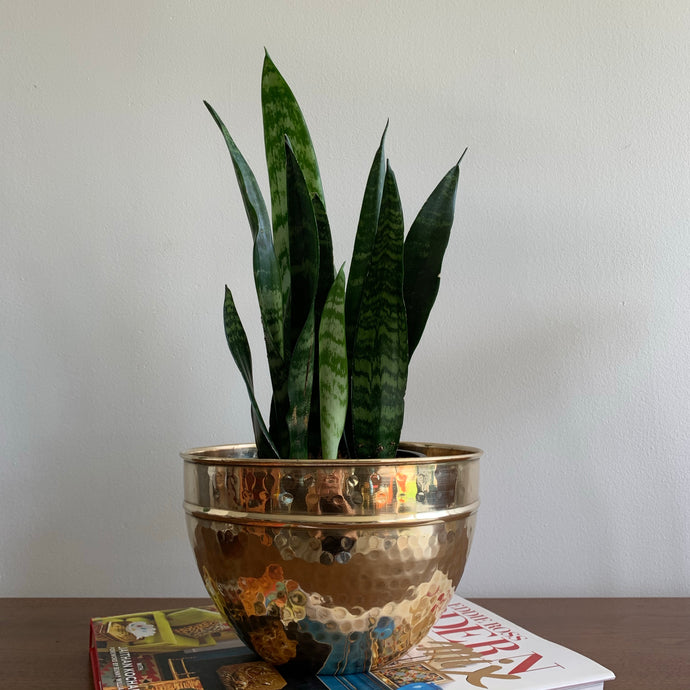 Vintage Brass Planter Pot